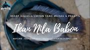 Resep Umpan Ikan Nila Babon Mudah Dan Praktis