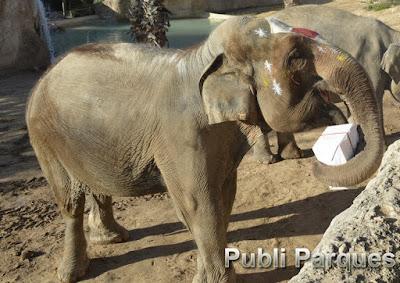 Regalos elefantes