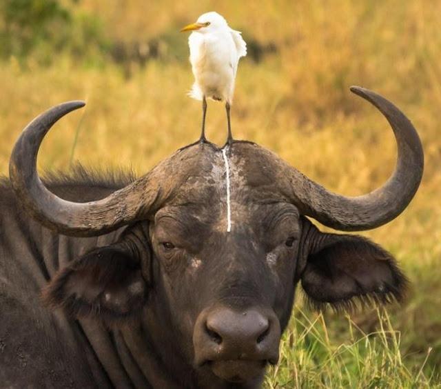 14 trò phá đám của đám động vật xấu tính, xấu nết