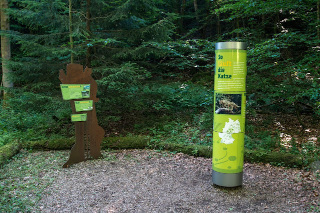 Wildkatzen-Walderlebnis und Wildkatzenstieg zum Wildkatzengehege Bad Harzburg 05