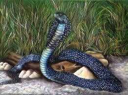 Naja é um gênero de serpentes venenosas da família Elapidae