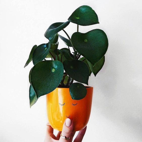 Such a lovely orange pot- design addict mom #plants