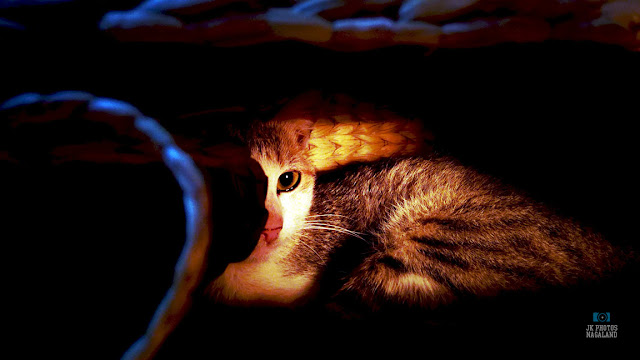 Cat in a basket photos - Pet Photos