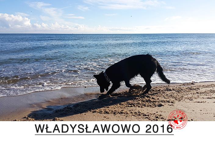 Zona Czarny Wilk Wakacje Nad Morzem Władysławowo