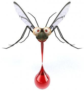 البعوض والإيدز، عجائب وغرائب