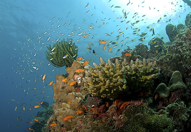 Coral reeds are the most biodiverse areas on the earth