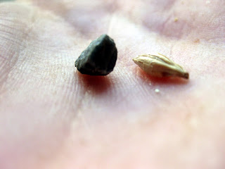 A grain sized pebble from a bag of Valley Malt