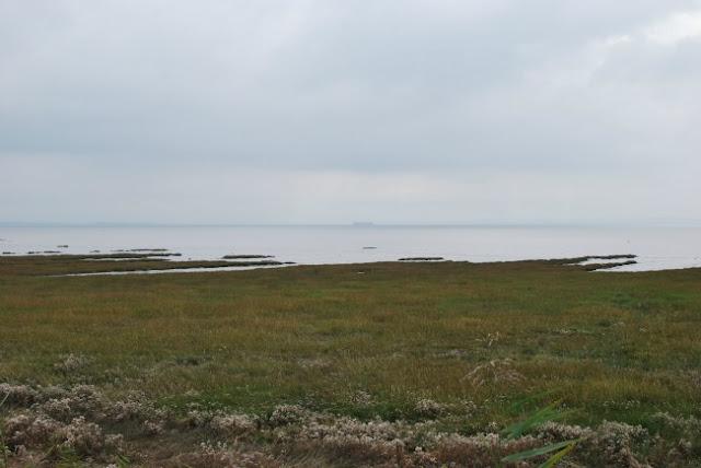 RSPB-Newport-Wetlands-View-of-estuary
