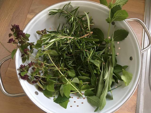 Nyplukkete urter klar for å lage urtesalt. Hyttehagen.