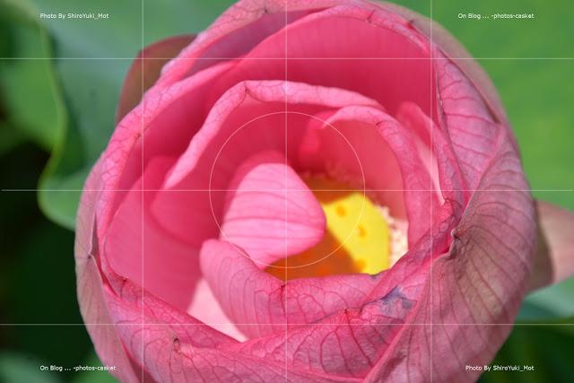 花 蓮 Lotus Blossom Duke Ellington