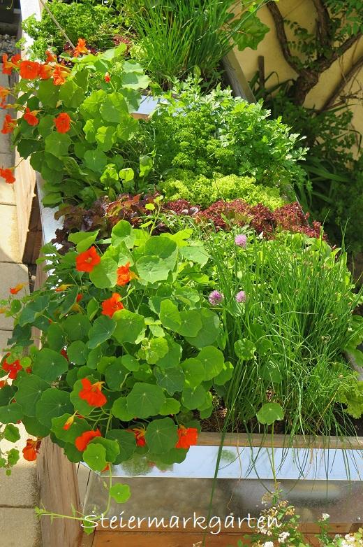 Mischkultur-Hochbeet-Steiermarkgarten