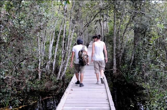 taman nasional tanjung puting berada di provinsi kalimantan tengah kabupaten kotawaringin barat pangkalan bun kecamatan kumai