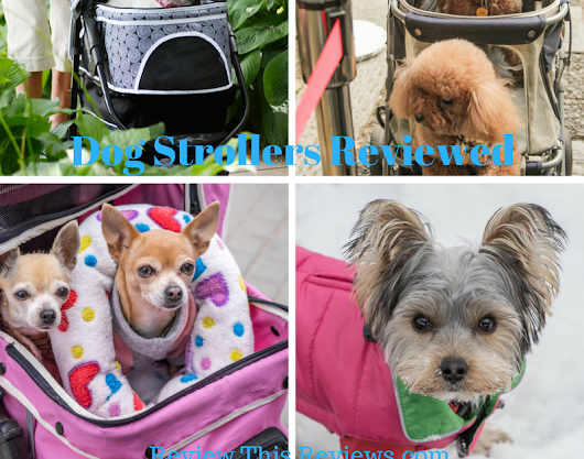You Have to See This! Excellent Dog and Cat Strollers Reviewed!