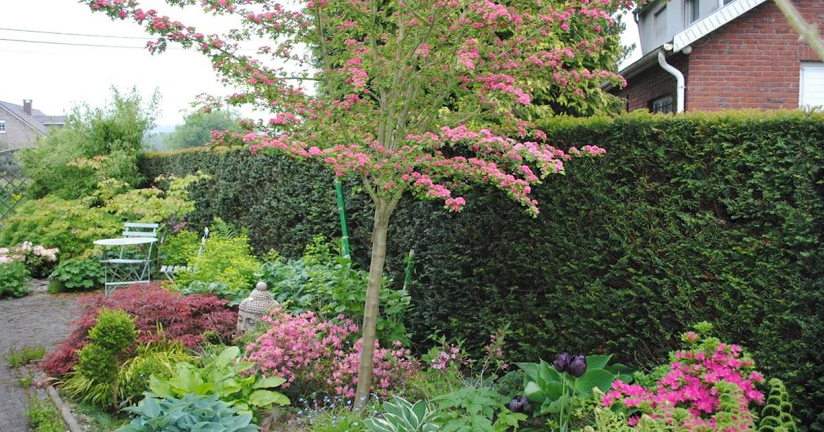 la passion d 39 anne marie mes arbres pour mon petit jardin. Black Bedroom Furniture Sets. Home Design Ideas