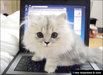 صور صور قطط كيوت 2020 خلفيات قطط جميلة جدا cats49.png