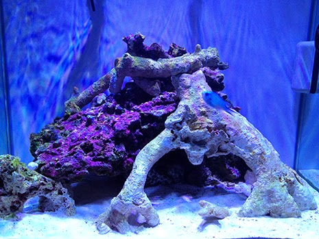 8 Things You Should Never Do When Starting A New Reef