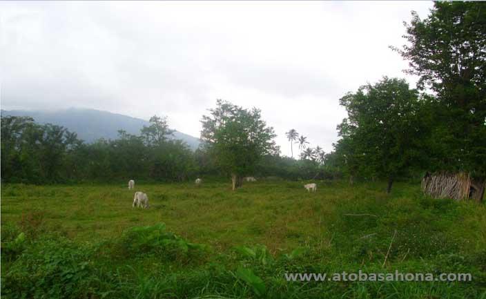 Kelebihan dan Kekurangan Sistem Agroforestri