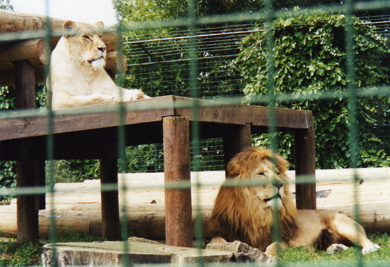 The Bereavement Of The Lion Keeper Essay