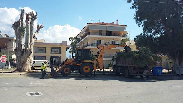 Ολοκληρώθηκε το κλάδεμα μεγάλων δένδρων στην οδό Αιγίου στο Ναύπλιο