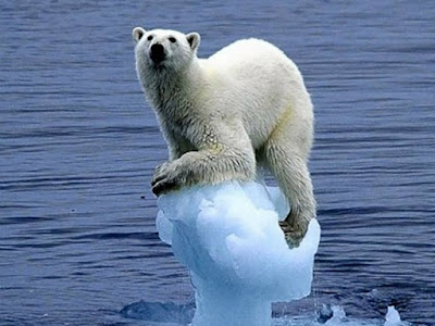 Image result for global warming effects