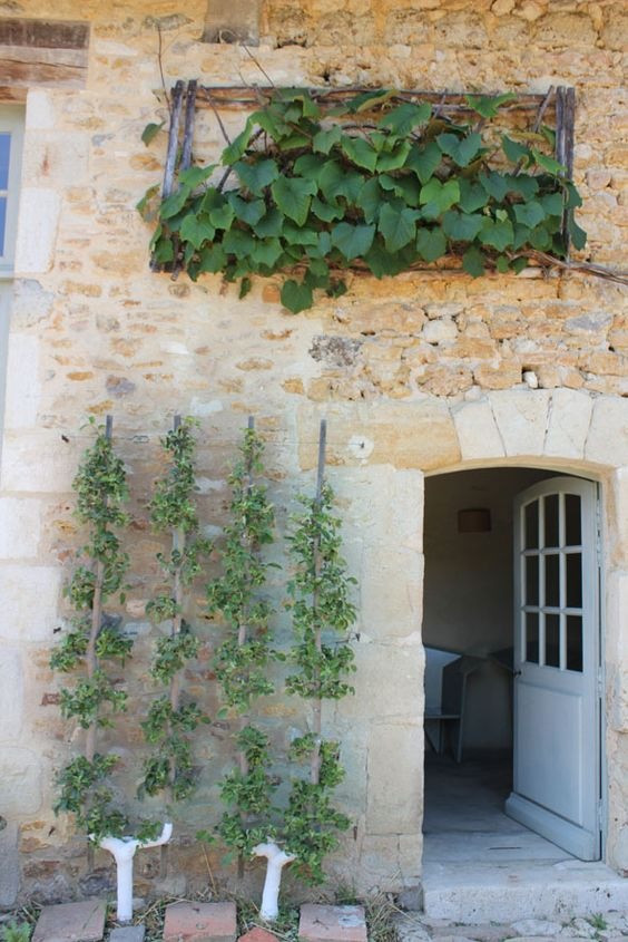 Charming limestone #Frenchfarmhouse exterior with climbing vines and arched door on Hello Lovely Studio