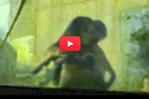Секс видео в окне