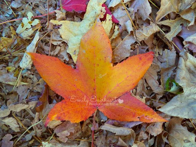 Orange and yellow leaf.