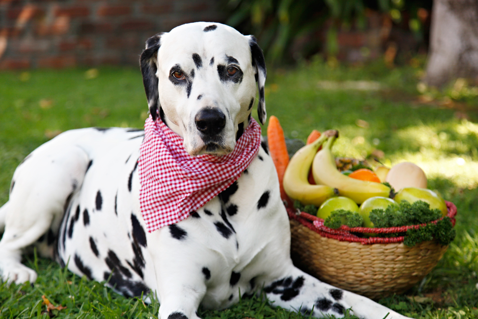 Dogs Eat Sweet Potato Or Squash