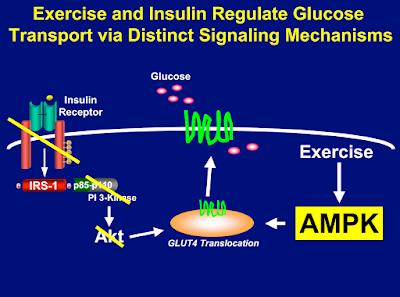 senaman diabetes gula dalam darah