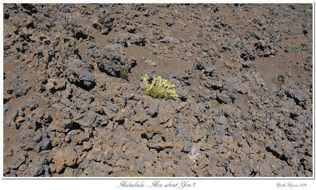 Haleakala: How about You?
