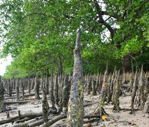 Jenis-jenis akar yaitu Akar napas