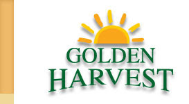 new ipo news of  Golden Harvest Agro Industries Ltd.