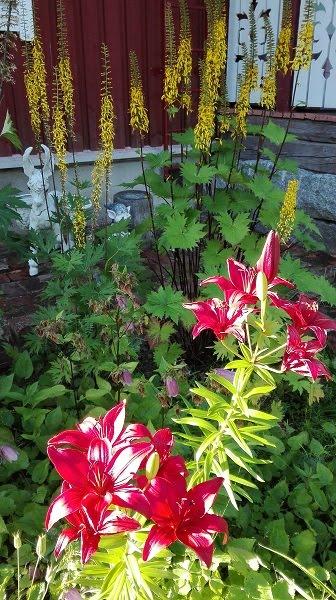 kukkapenkki liljat nauhukset