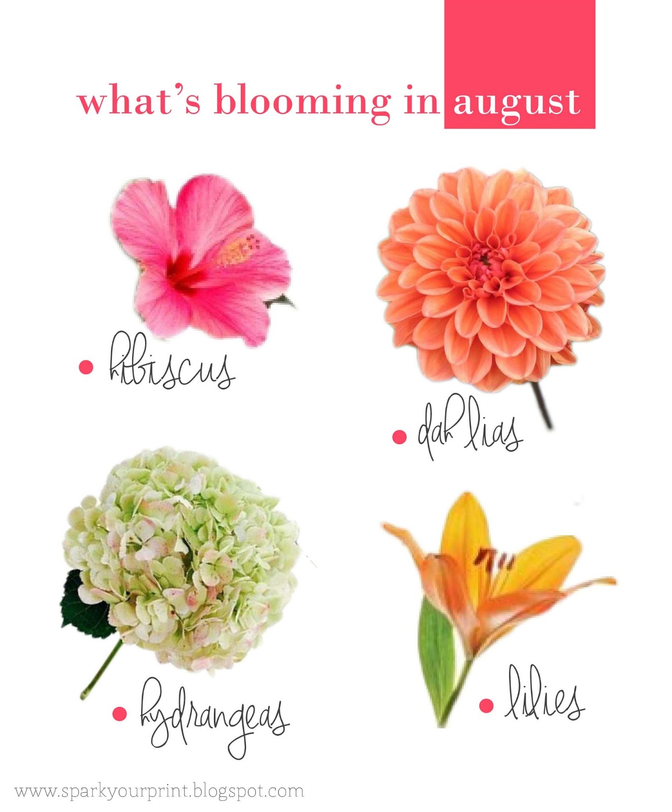 Wedding Flowers Names: SPARK YOUR PRINT: {colors} August Flowers