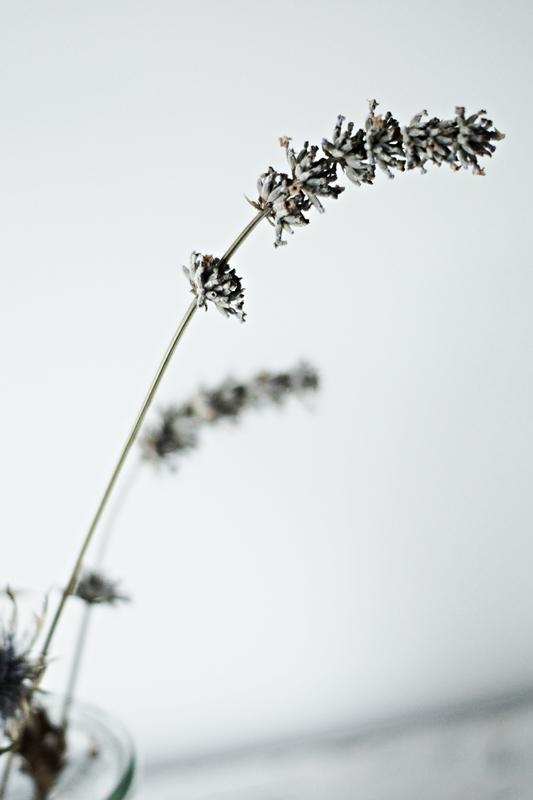 Blog + Fotografie by it's me! - ein getrockneter Lavendelzweig