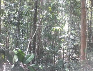 Dua formasi ekosistem hutan : klimatis dan formasi edafis