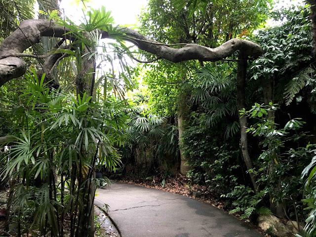 ハダカデバネズミや歩く植物??上野動物園で見逃せないなおすすめ動物8つ【n】 ウォーキングパーム