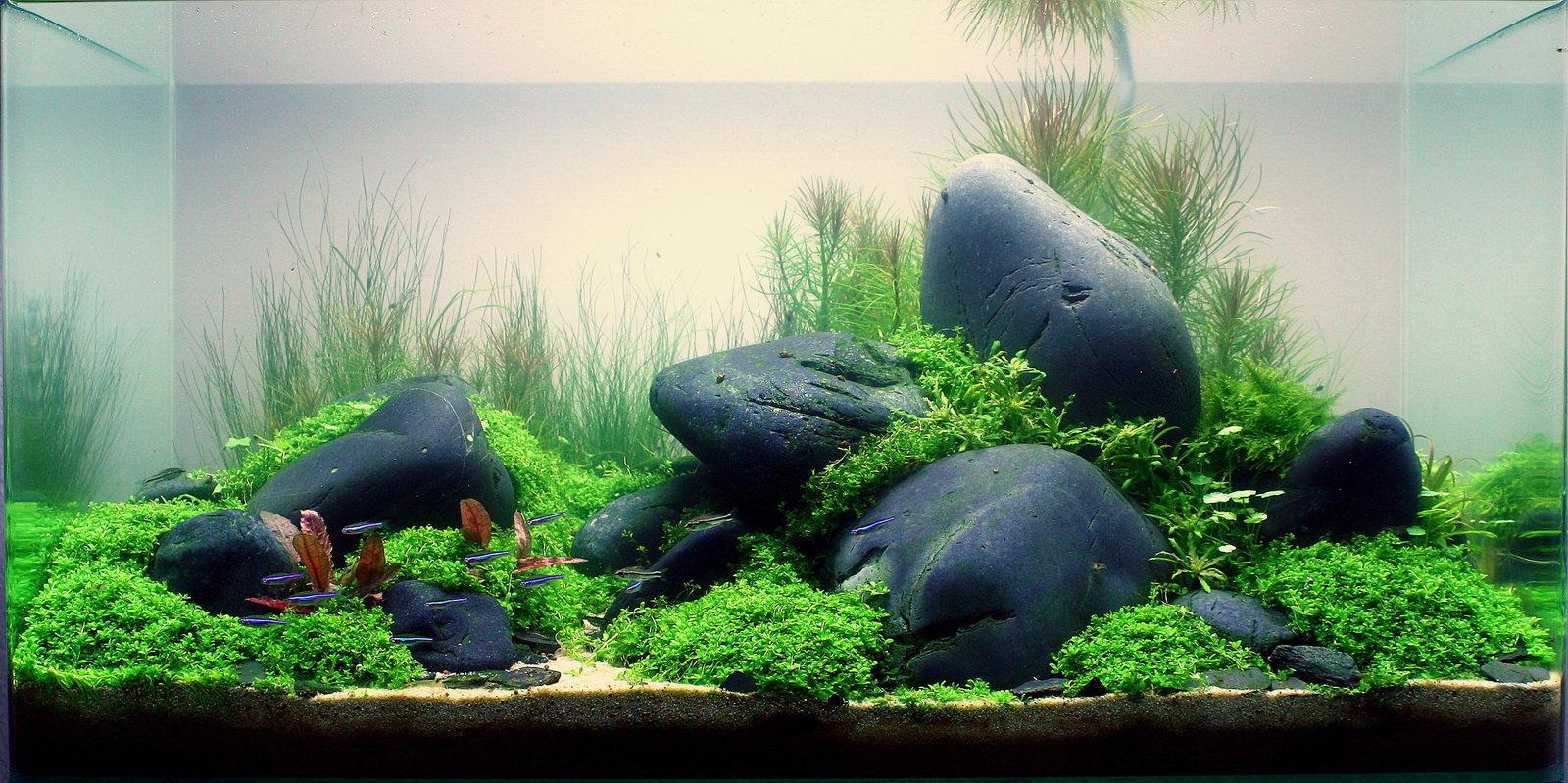 Bố cục hồ thủy sinh với đá cuội
