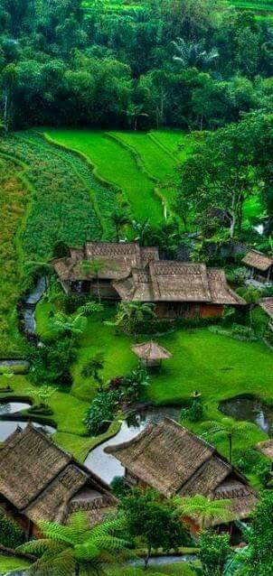 Pemandangan Sawah di Desa Rumah Penduduk Tradisional