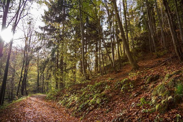 Kästeklippentour Bad Harzburg  Premiumwanderung Harz  Wandern-Harz 04