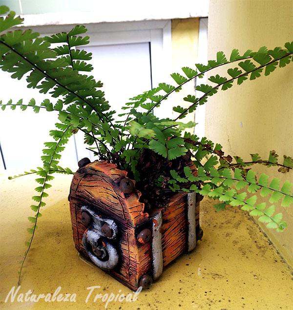Helecho creciendo en maceta de barro con forma de cofre