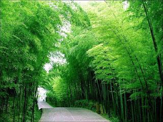 Keajaiban Pepohonan