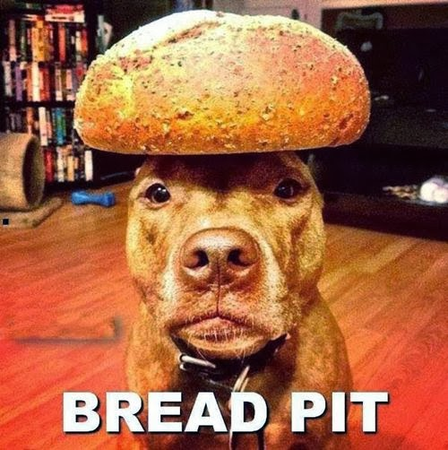 Funny Bread Pit Dog Pun - Brad Pitt Celebrity Movie Star