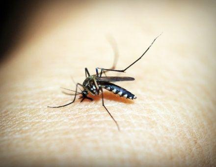 Científicos se unen para erradicar la malaria