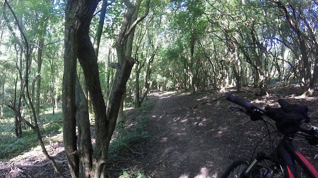 cycling through woods