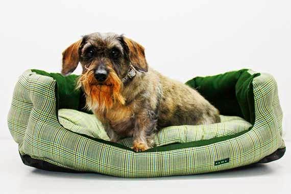 Brigitte, una teckel de 15 añazos, en una de las camas caninetto de estilo british