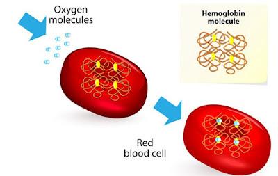 Obat Penambah HB Darah Di Apotik