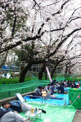 Hanami at Ueno Park Tokyo Japan