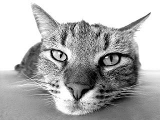 Kucing pemalas