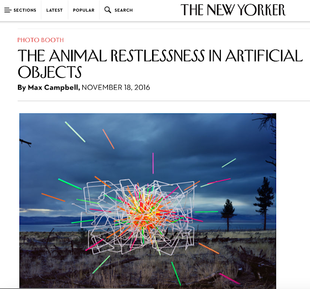 http://www.newyorker.com/culture/photo-booth/thomas-jackson-emergent-behavior-animal-restlessness